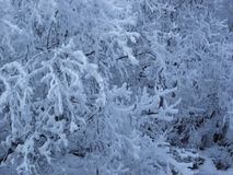 Snow trees winter Siberia road Khamar-Daban royalty free stock photography
