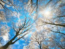 Snow on treetops against the deep blue sky Royalty Free Stock Images