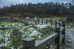 Snow in Tropical Yangmingshan mountain Stock Images
