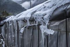 Snow in Tropical Yangmingshan mountain Stock Photos
