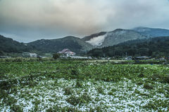 Snow in Tropical Yangmingshan mountain Royalty Free Stock Image