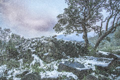 Snow in Tropical Yangmingshan mountain Royalty Free Stock Photo