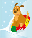 Snow tubing puppy. Cartoon vector isolated on a simple background editable layers Stock Photos