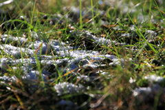 Snow under the sun and grass Stock Photo