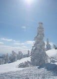 snow under trä Arkivbilder