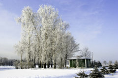 Snow View. Snowhite landscape with trees covered with snow Stock Image