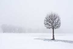 Snow View. Snowhite landscape with 1 tree covered with snow shot in Moscow Royalty Free Stock Images