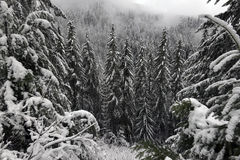 Snow View Snoqualmie. Winter in Snoqualmie National Forest, North Cascades, Washington State, USA Stock Images
