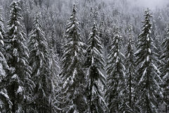 Snow View. Winter in Snoqualmie National Forest, North Cascades, Washington State, USA Stock Photos