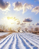 Snow in village Royalty Free Stock Photography