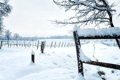 Snow on the vineyard Stock Photo