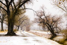 Snow Walk With Dog. A man and his dog walk along a rural road during light snowfall in California's Eastern Sierra Stock Photo