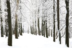 Snow walkway in winter forest Royalty Free Stock Image