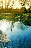 Snow water in the spring. A big water puddle on a green meadow at a spring evening with a root and trees in the background Royalty Free Stock Photos