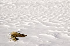 Snow Waves. Field of snow with ripples and rock Stock Photography