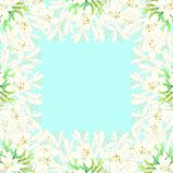 Snow White Agapanthus Border - Lily of the Nile, African Lily on Blue Mint Background. Vector Illustration Stock Illustration
