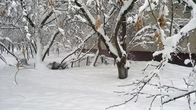 Snow covered city backyard white winter trees royalty free stock images