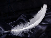 Snow White Feather Stock Photography