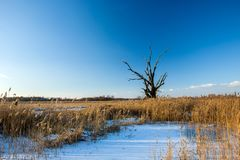 Snow on a wild meadow and dead tree. Snow on a wild meadow, dead tree and cloudless sky stock image
