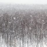 Snow windstorm over trees in park in winter day. Snow windstorm over trees in Timiryazevskiy park in Moscow in winter day Royalty Free Stock Images