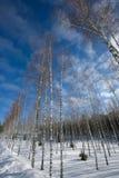 Snow winter. Cold blue sky Stock Photos
