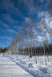 Snow winter. Cold blue sky Royalty Free Stock Photography