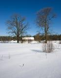 Snow winter. Cold blue sky Royalty Free Stock Photos