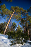 Snow Winter. Blue day white sky sun Royalty Free Stock Photography