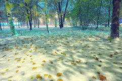 Snow winter-autumn evening scenery Stock Photography