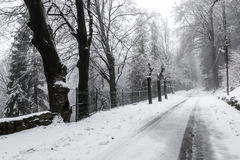Snow in a winter day, forest of Campo dei Fiori - Varese Stock Photo