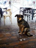 The dog thet is waiting for its owner. Snow winter dog cafe homeless animal street cleaning town white holiday house object cold snow stock image