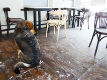 Homeless dog in an amply winter cafe. Snow winter dog cafe homeless animal street cleaning town white holiday house object cold snow royalty free stock photos