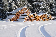 Snow winter firewood forest Stock Image