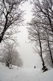 Snow winter fog walk alone. A guy walking alone in a fog foggy day, snow nature, winter season Stock Image