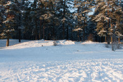 Snow winter forest. Scene on winter snow forest Royalty Free Stock Photography