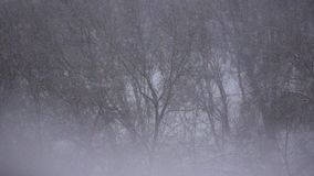 Snow Winter Forest Background Slow Motion. This is a beautiful natural video of a Winter Frost Trees and Snow Winter Background Slow Motion Video Full HD stock video footage