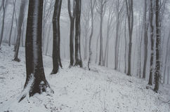 Snow in winter forest Royalty Free Stock Photo