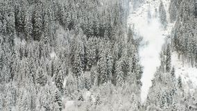 Snow winter forest firs trees texture chimney flue smoke. A snow winter forest firs trees texture chimney flue smoke stock video