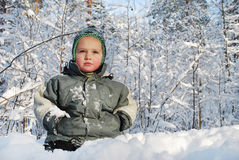 On the snow in winter forest sits a  little boy. Stock Images