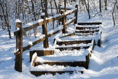 Snow, Winter, Freezing, Tree Stock Photo