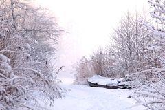 Snow, Winter, Frost, Freezing stock photo