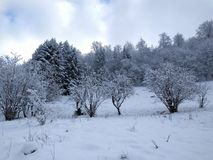 Snow, Winter, Frost, Freezing royalty free stock images