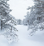 Snow winter landscape Stock Photography