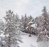 Snow winter landscape Royalty Free Stock Image