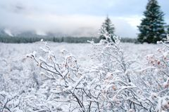 Snow and Winter Landscape Royalty Free Stock Photos