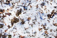 Snow and winter leaves Stock Photography