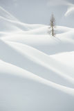 Snow, winter mountain landscape, tree alone Stock Photography
