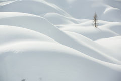Snow, winter mountain landscape, tree alone Royalty Free Stock Images