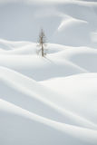 Snow, winter mountain landscape, tree alone Royalty Free Stock Photography