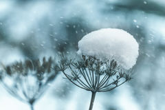 Snow winter nature lake water leaf stream. Landscape morning royalty free stock image